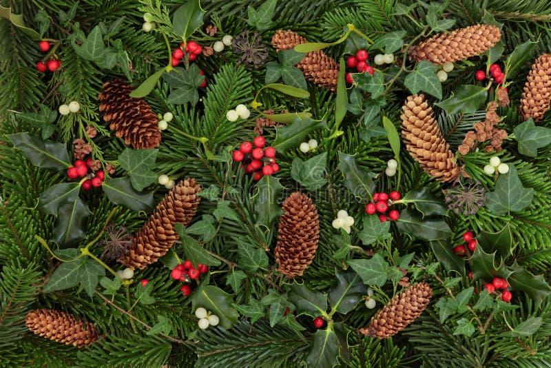 Flora E Fauna Do Inverno Imagens de Stock