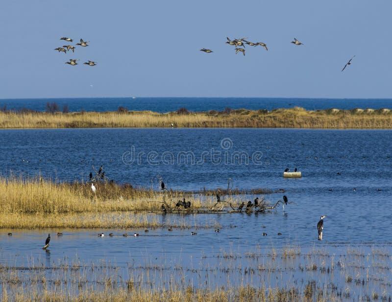 Flora e fauna em oásis com fauna e flora fotografia de stock royalty free