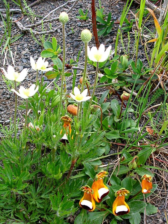 Flora en parc national de Torres del Paine, Patagonia du sud, Chili photos libres de droits