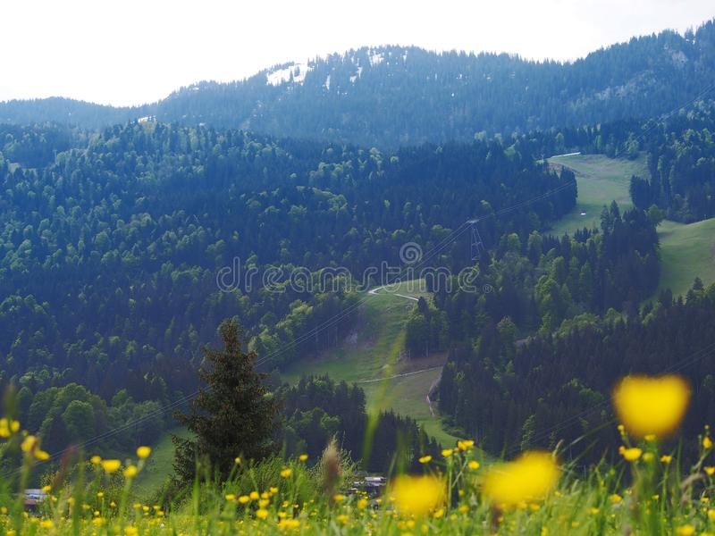 Alps mountains in Germany. Flora and Fauna are beautiful mountains and peaks in the Alps. High majestic mountains and meadows with flowers in an amazing stock photos