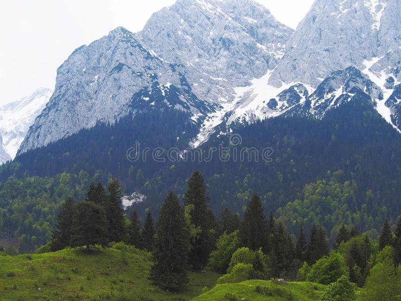 Alps mountains in Germany. Flora and Fauna are beautiful mountains and peaks in the Alps. High majestic mountains and meadows with flowers in an amazing royalty free stock photos