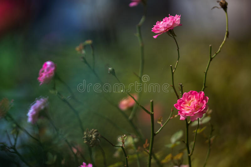 Download Flora And Fauna At Fraser Hill Stock Image - Image of fresh, repetition: 41130339