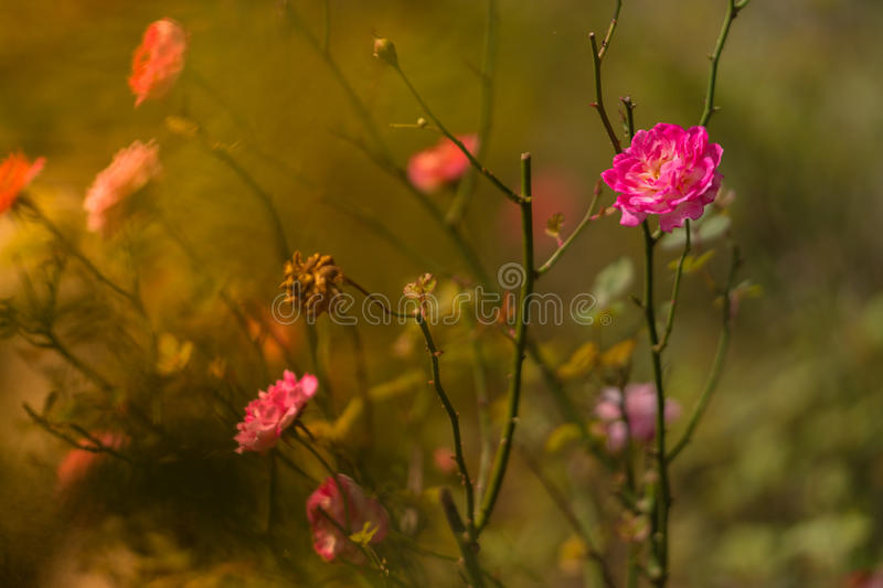 Download Flora And Fauna At Fraser Hill Stock Photo - Image: 41130414