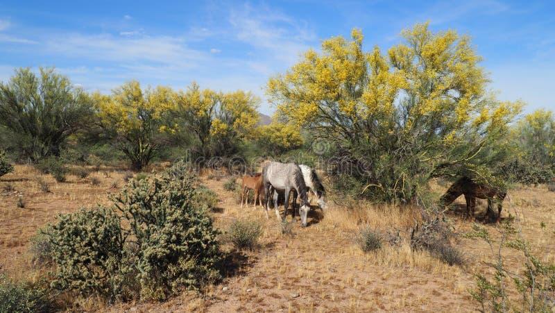 Flora And Fauna of The Desert stock photos