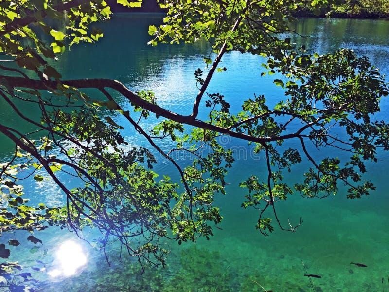 Flora and fauna of Plitvice Lakes National Park or nacionalni park Plitvicka jezera, UNESCO natural world heritage - Plitvica royalty free stock photography