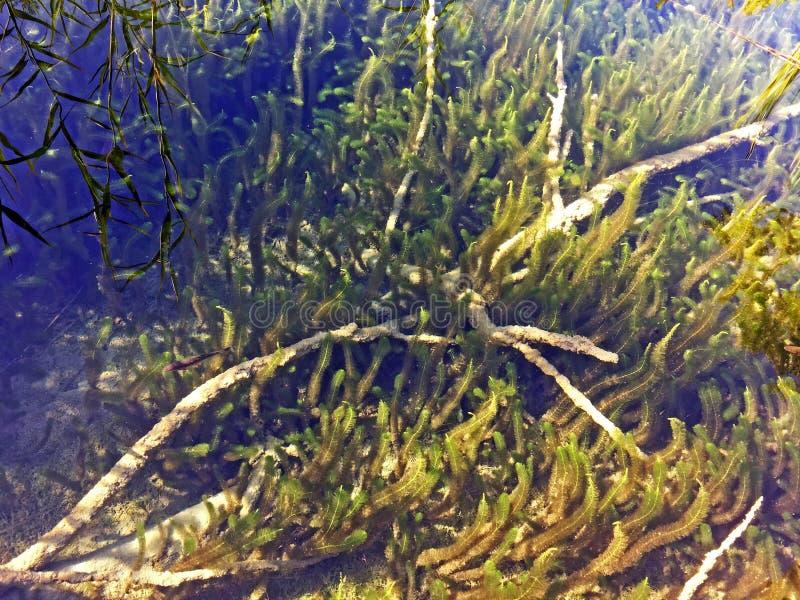 Flora and fauna of Plitvice Lakes National Park or nacionalni park Plitvicka jezera, UNESCO natural world heritage - Plitvica stock images