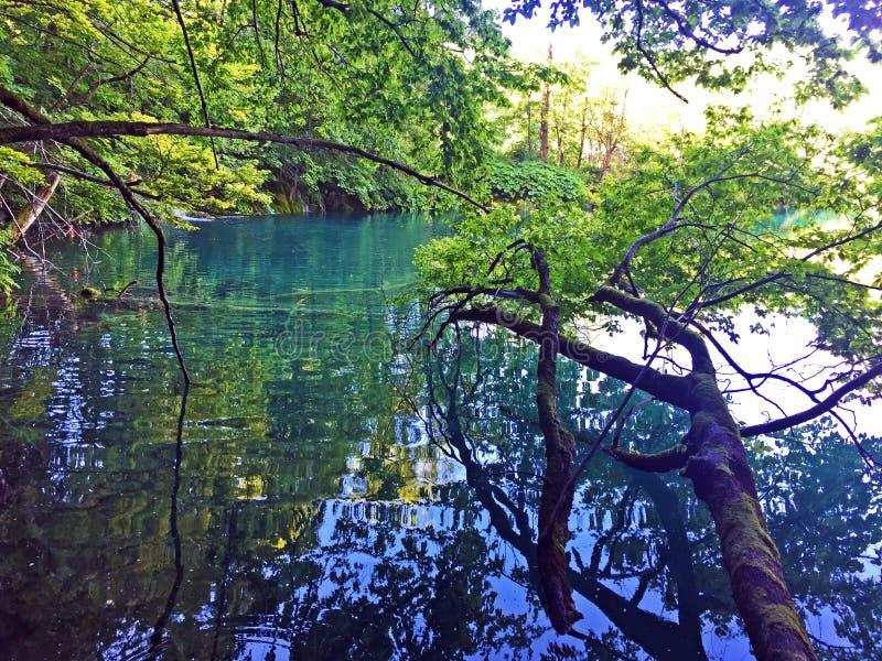 Flora and fauna of Plitvice Lakes National Park or nacionalni park Plitvicka jezera, UNESCO natural world heritage - Plitvica stock photo