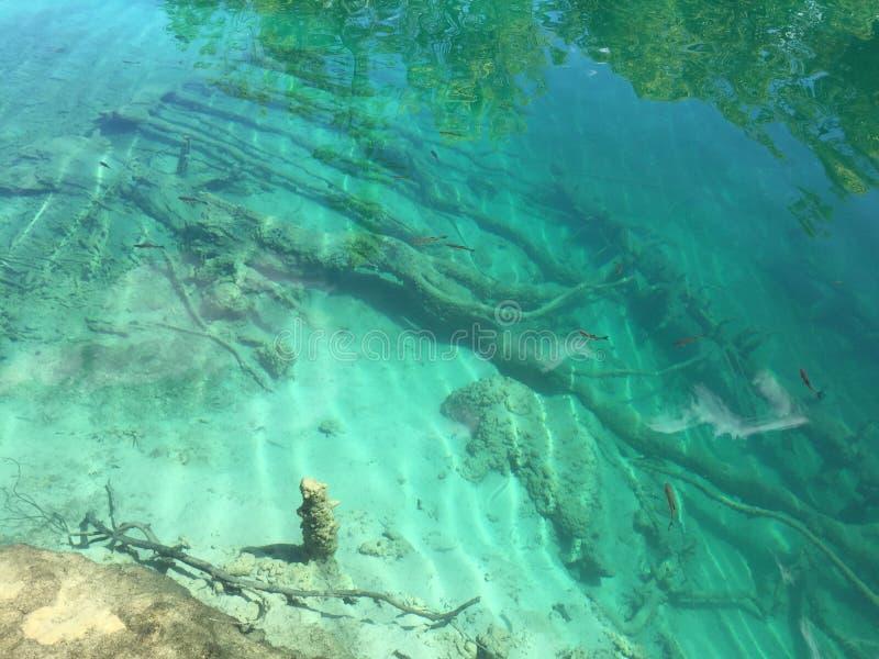 Flora and fauna of Plitvice Lakes National Park or nacionalni park Plitvicka jezera, UNESCO natural world heritage. Plitvica, Croatia stock images