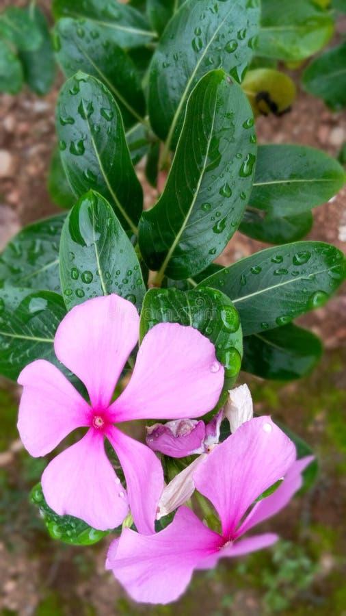 Flora, floración de la naturaleza, hermoso, brillante, estación, color, petwl foto de archivo libre de regalías