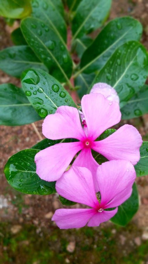Flora, floración de la naturaleza, hermoso, brillante, estación, color, petwl fotografía de archivo libre de regalías