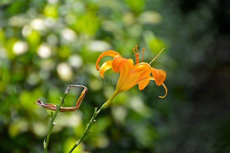 Flora, Flower, Plant, Wildflower Free Public Domain Cc0 Image