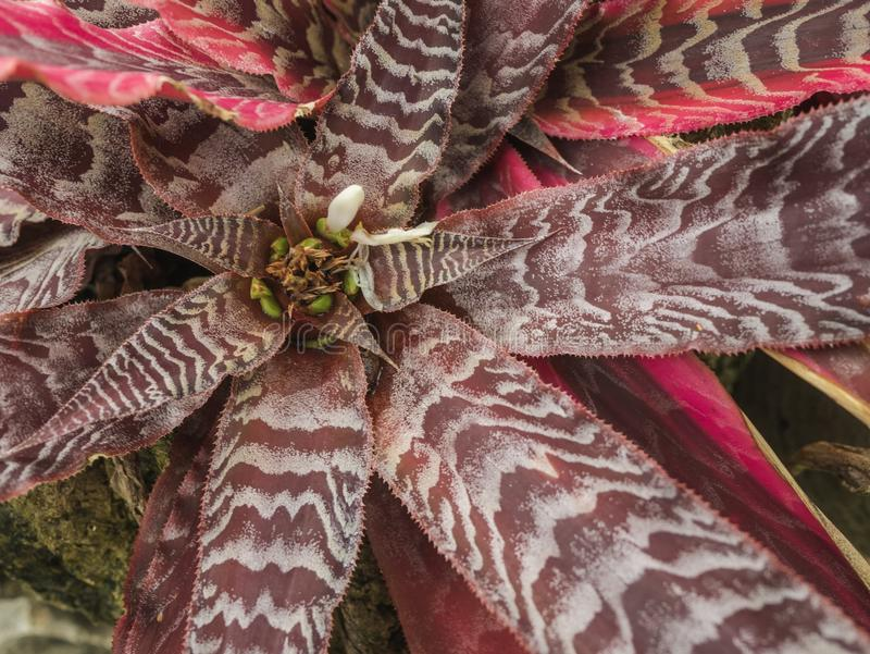 Flora flower red leaf plant in forest with stone royalty free stock image