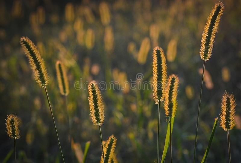 Flora, Grass Family, Sky, Grass royalty free stock image