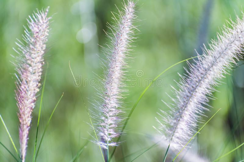 Flora Grasses fotografia stock libera da diritti
