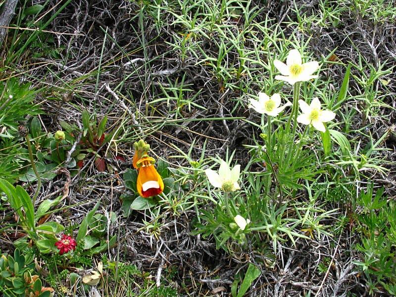Flora i den Torres del Paine nationalparken, sydlig Patagonia, Chile royaltyfria foton