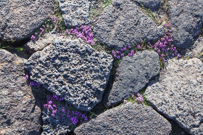 Flora im vulkanischen Wüstenödland lizenzfreie stockfotografie