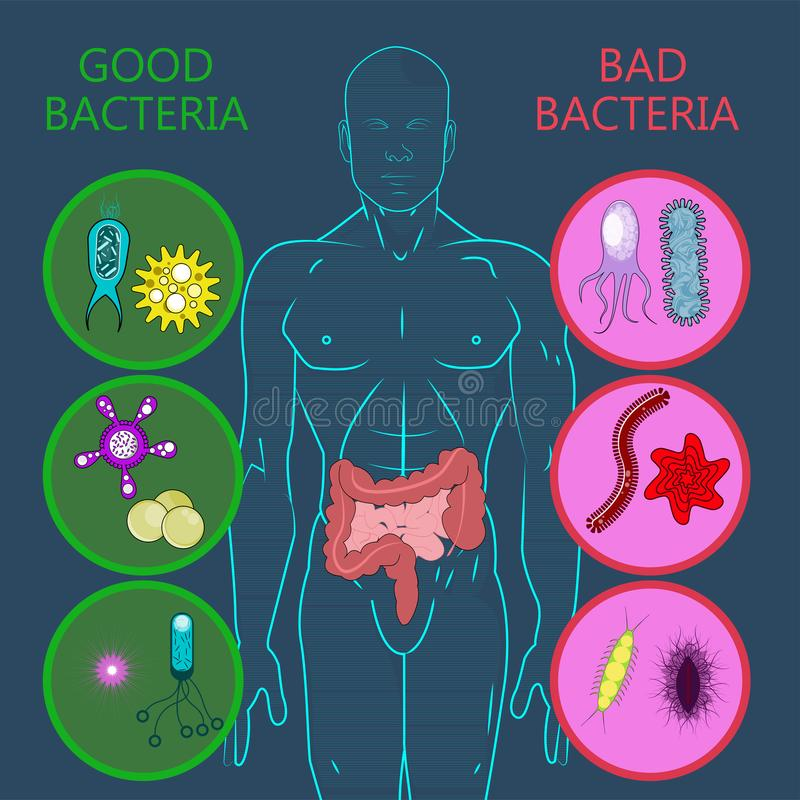 Flora intestinal, sistema de buenas y malas bacterias libre illustration