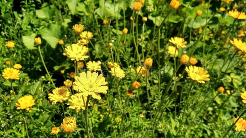 Flora kwiatu trawy żółty lato mini zdjęcia royalty free