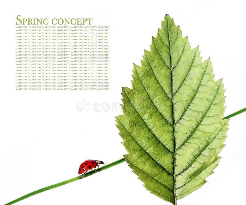 Flora and ladybird stock photo