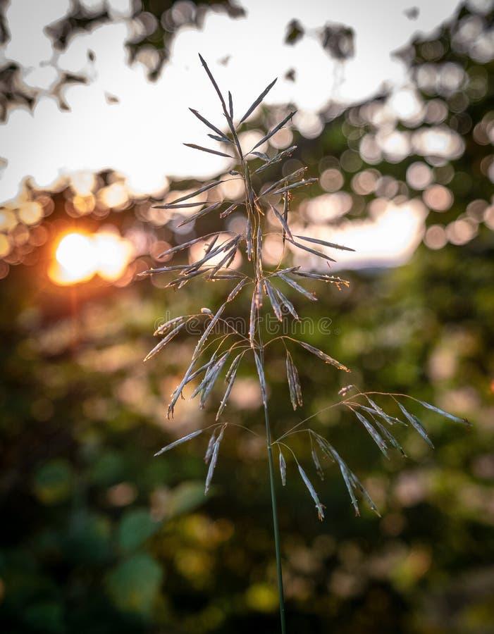 Flora, Leaf, Plant, Close Up Free Public Domain Cc0 Image