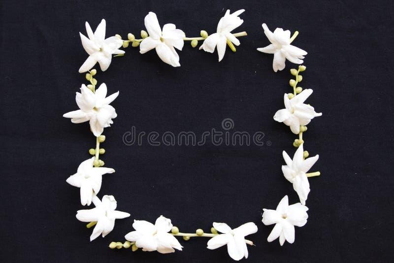 Flora local do jasmim das flores brancas de Ásia no preto foto de stock