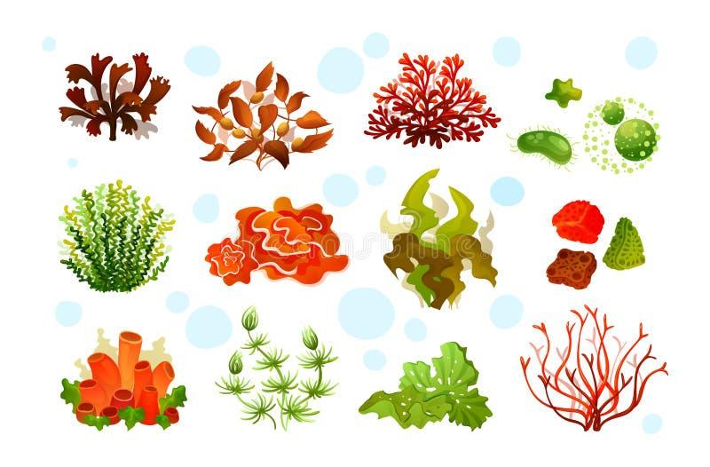 Flora marinha do aquário, algas subaquáticas do recife de corais, plantas do oceano ilustração stock