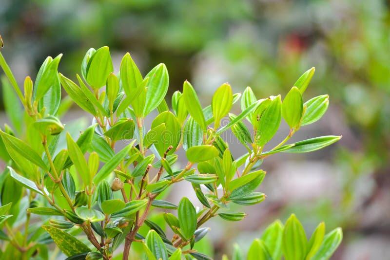 Flora stock photos