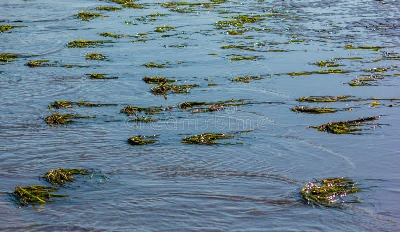 Flora och fauna i lagunen kring Laguna del Mort, jorden är lersandad, både på kotpelarna i tallskogen och på arkivbild