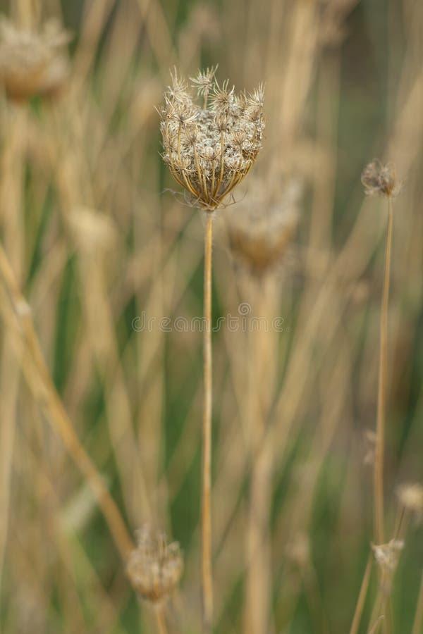 Flora, Plant, Grass Family, Grass Free Public Domain Cc0 Image