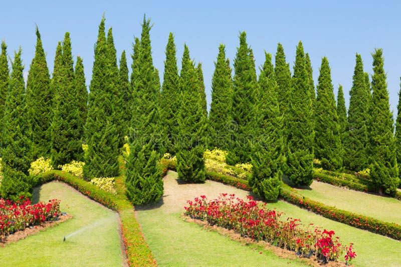 Download Flora Real Ajardinada Ratchaphruek Do Jardim Imagem de Stock - Imagem de fora, beleza: 29841157