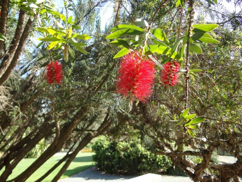 Download Flora rossa fotografia stock. Immagine di botanico, rosso - 117980300