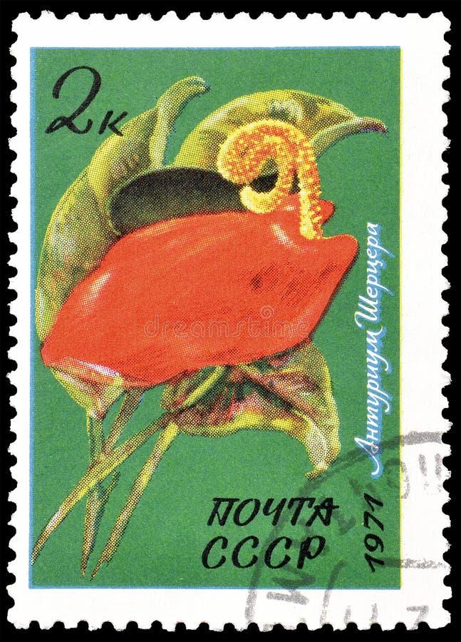 Flora sui francobolli fotografia stock libera da diritti