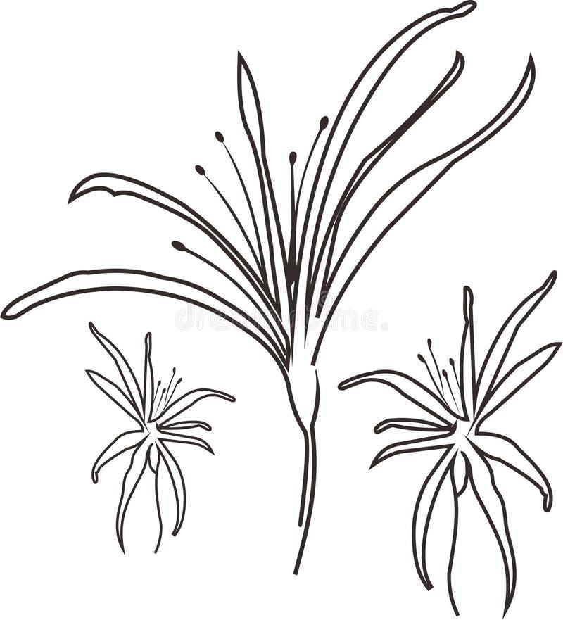 flora tailandesa ilustração stock