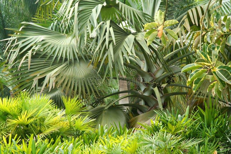 Flora tropical imagem de stock