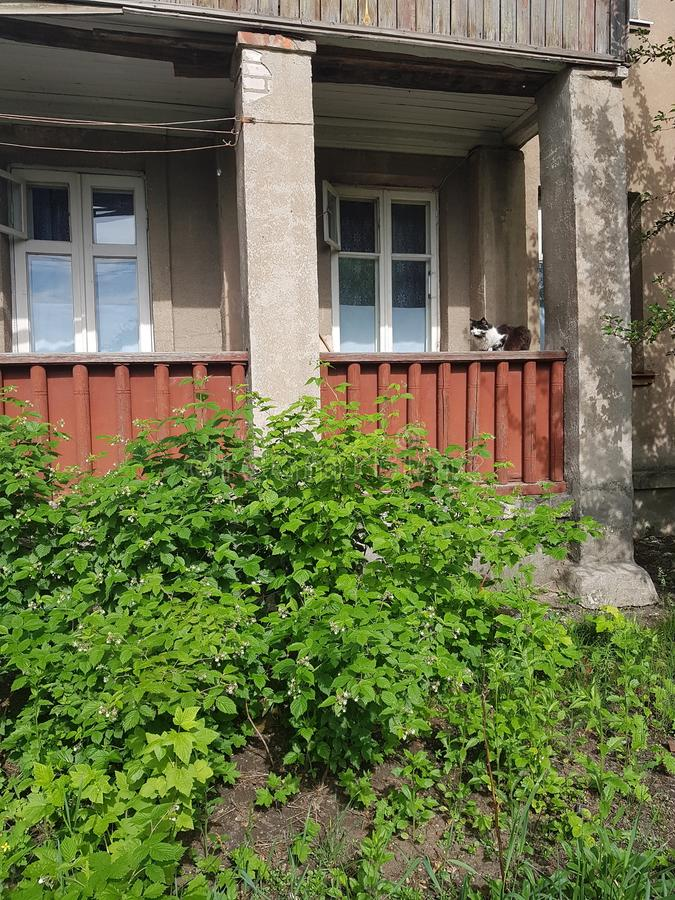 Flora of Ukraine. Landscape. A raspberry plant bush near a residential brick house with a brown balcony. On the balcony there is royalty free stock photo