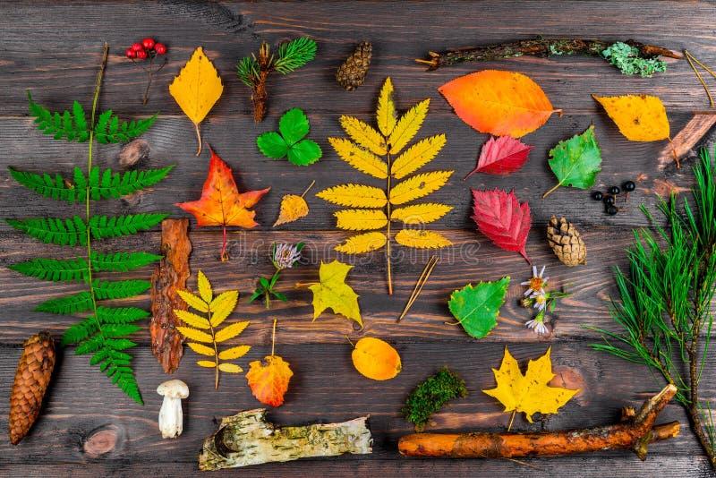 Flora variada da floresta em placas de madeira - o outono objeta a vista superior s imagem de stock royalty free