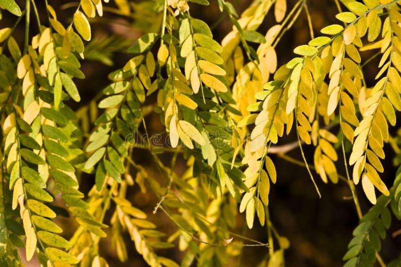 Flora variopinta di autunno immagini stock libere da diritti