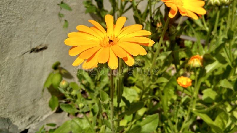 Flora verde amarela mini 19 do jardim da grama da flor 07 19 foto de stock