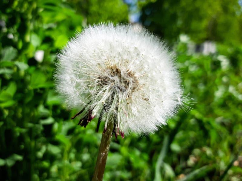 Flora y belleza de la fauna fotos de archivo