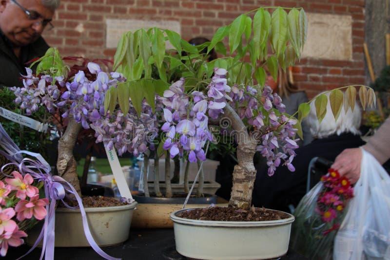 Flora y decoros 2017 imágenes de archivo libres de regalías