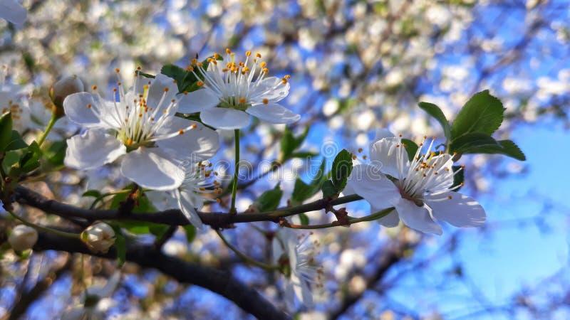 Floraa immagini stock libere da diritti