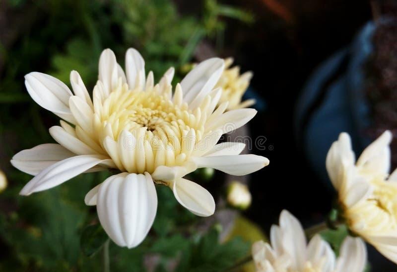 Floraaard royalty-vrije stock foto