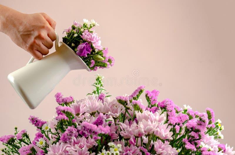 Florabegreppsfoto som hand som rymmer en vit kruka med blommor som bevattnar buketten av färgrika blommor med pastellfärgade rosa fotografering för bildbyråer