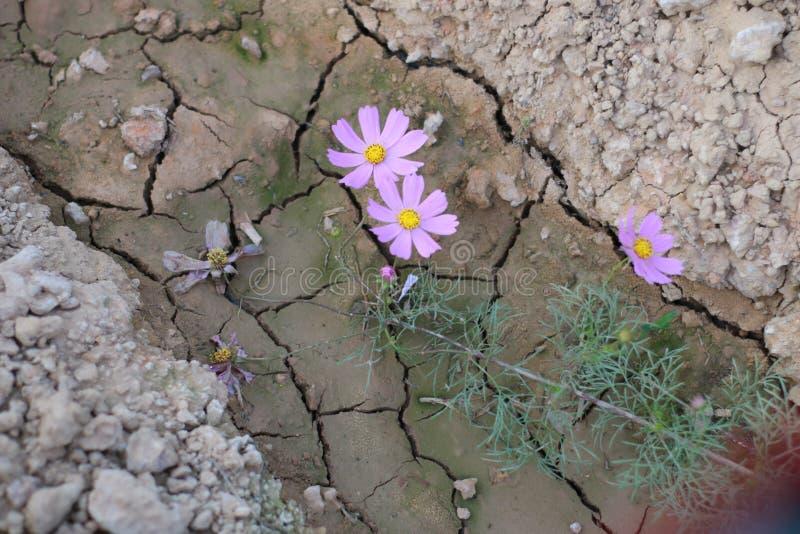 Florabloem stock afbeelding