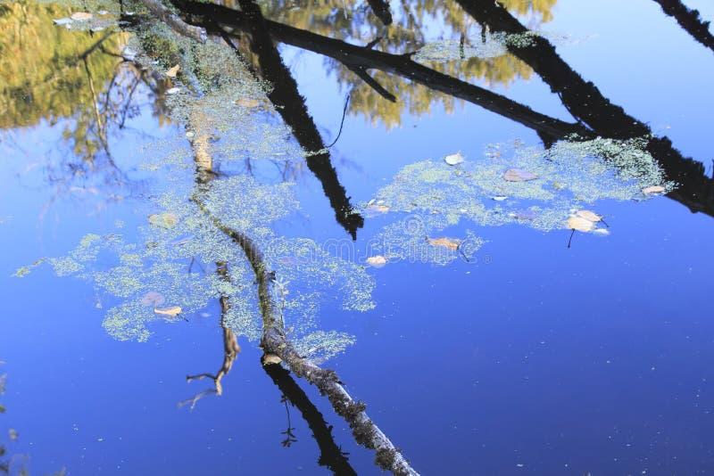 Floración algácea o floración de las algas imagenes de archivo