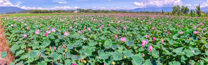Floración borrosa del loto del foco selectivo del panorama fotos de archivo libres de regalías