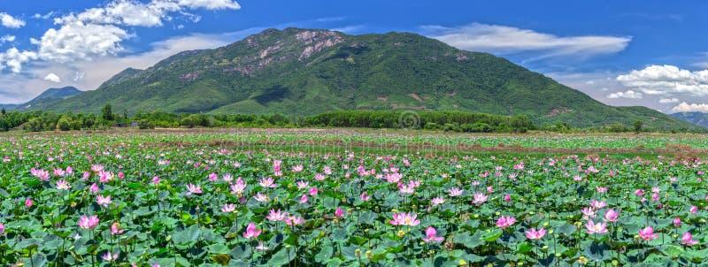 Floración borrosa del loto del foco selectivo del panorama fotografía de archivo