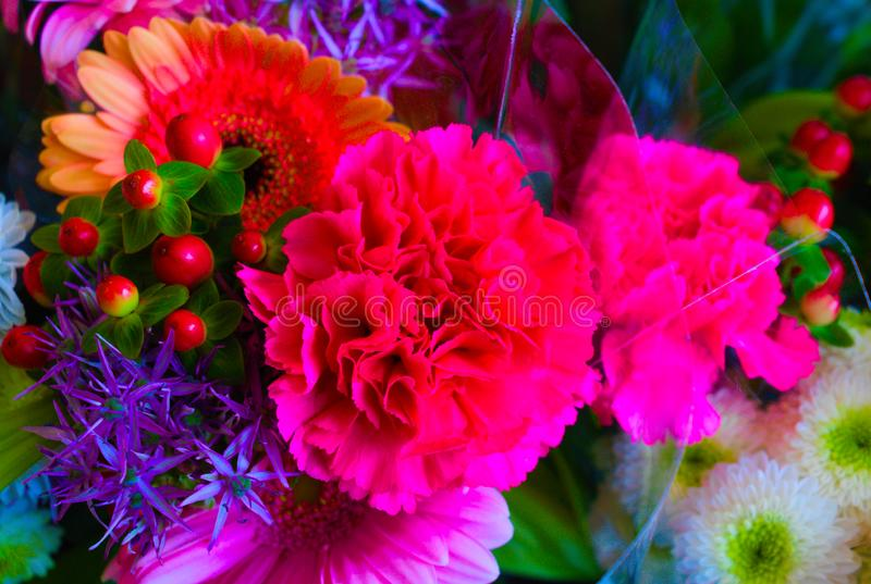 Floración de flores interiores imagen de archivo libre de regalías