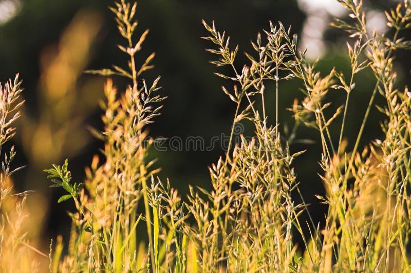 Floración de hierbas fotos de archivo