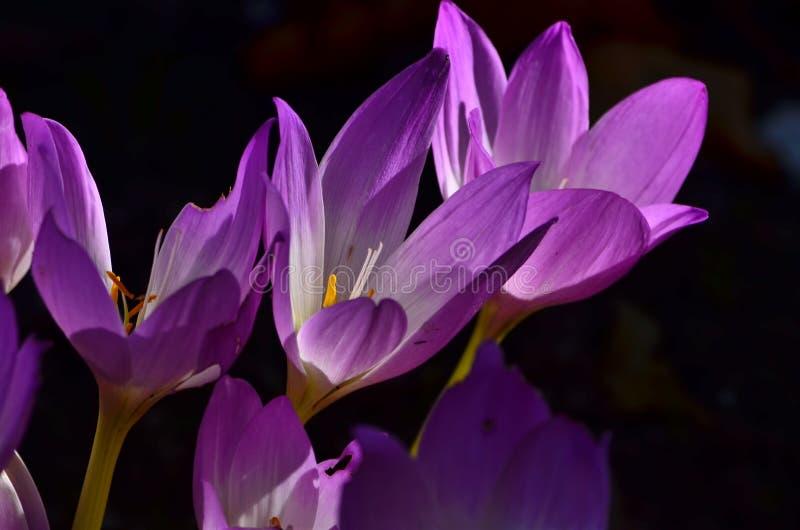 Floración de la flor fotografía de archivo